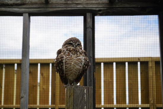 Burrowing Owl Interpretive Centre: Owls were super cute :)