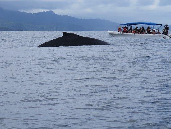 provinsen Puntarenas, Costa Rica: photo0.jpg
