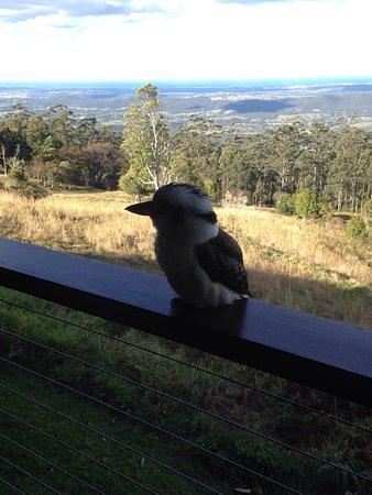 Mount Tamborine, Australien: photo1.jpg