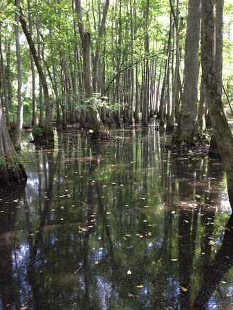 A wonderful trace through Tenessee, Alabama and Mississippi