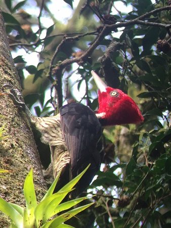 Guides of Monteverde