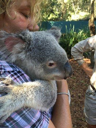 Australia Zoo: Kuddly Koala!