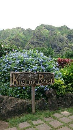 Kaneohe, Havaí: DSC_0175_large.jpg