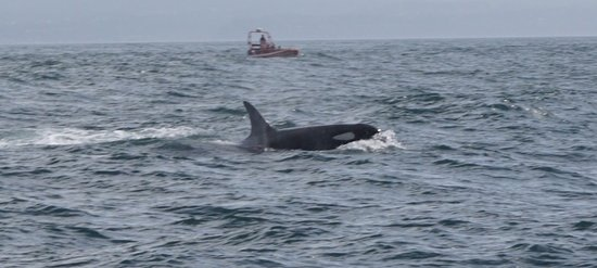 Eagle Wing Whale Watching Tours: photo1.jpg