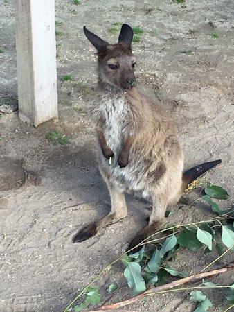 Grantville, Australia: photo3.jpg