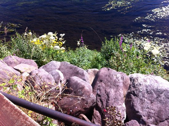 Killorglin, Irlanda: rocks and flowers at edge