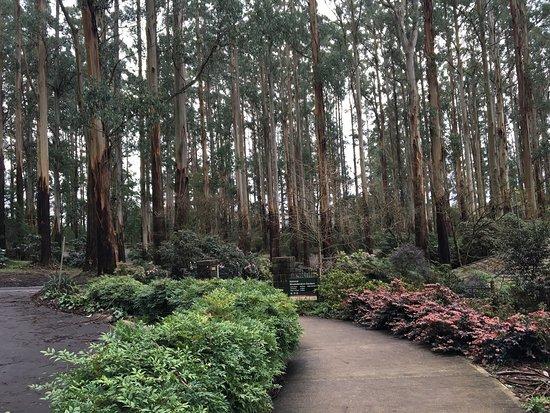Olinda, أستراليا: Picturesque car park