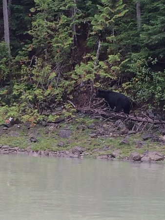 Blue River, Kanada: bear watching