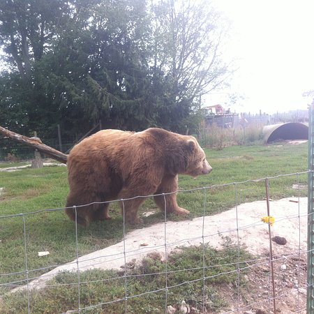 Sequim, WA: Kodiac bear
