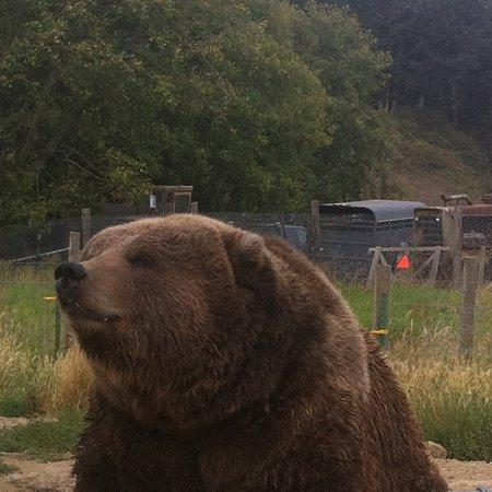 Sequim, WA: Adorable bear