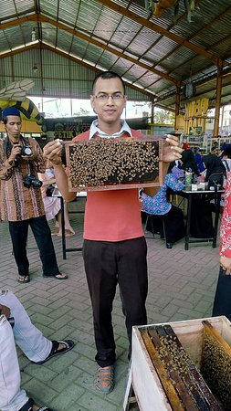 Lawang, إندونيسيا: Agro Tawon Wisata Petik Madu