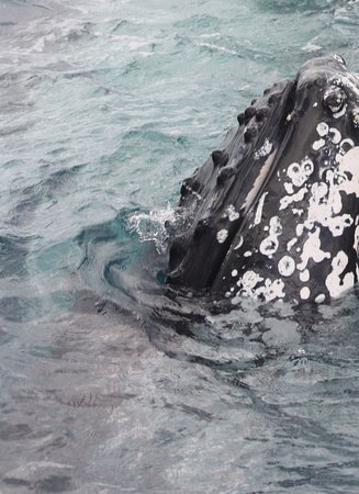 Urangan, ออสเตรเลีย: People watching for whales