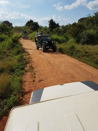 Habarana, ศรีลังกา: Jeeps at National Park