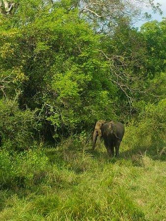 Habarana, ศรีลังกา: An elephant