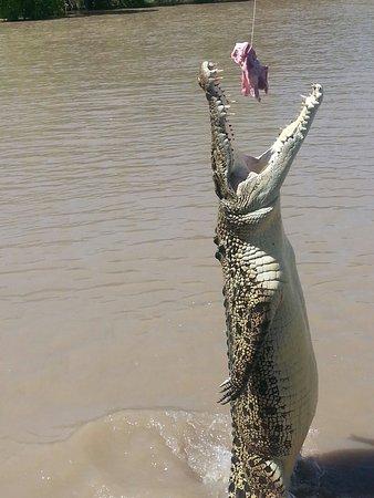 Northern Territory, Australia: 20160821_111126_large.jpg
