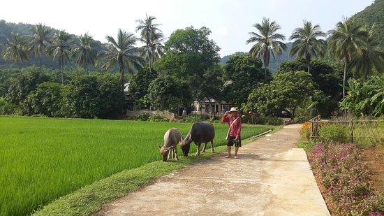 Mai Chau, Vietnam: 20160827_155413_large.jpg