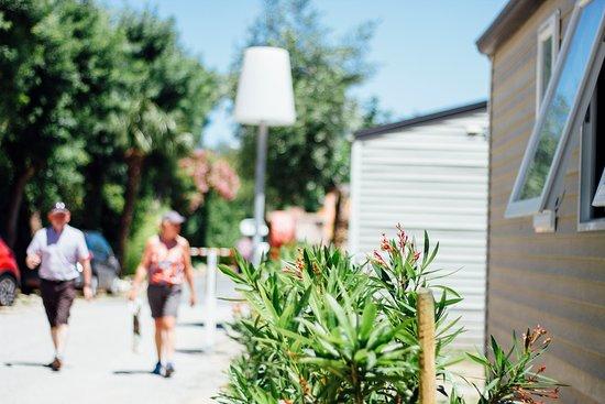 Camping Les Pins: Nos allées