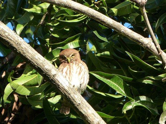 La Garita, Κόστα Ρίκα: bekeken in de tuin