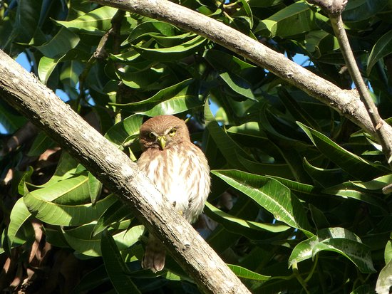 La Garita, Коста-Рика: bekeken in de tuin