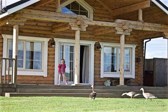 Hornsea, UK: Ducks and geese come right up to the lodge, we even had once walk into the lounge. Kids loved th