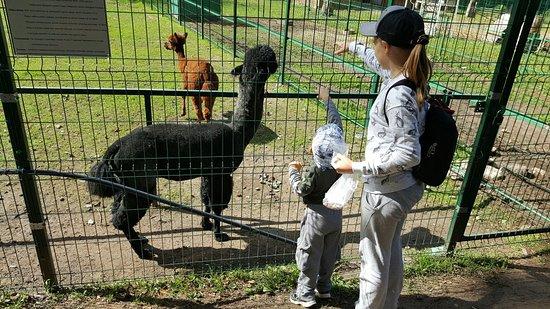 Zoo Park in Kostroma Photo