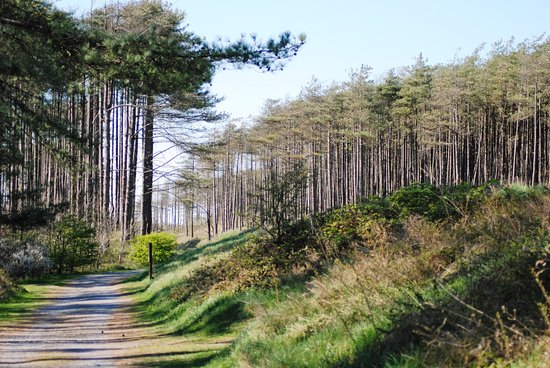 Pembrey, UK: Wooded area for walking and biking