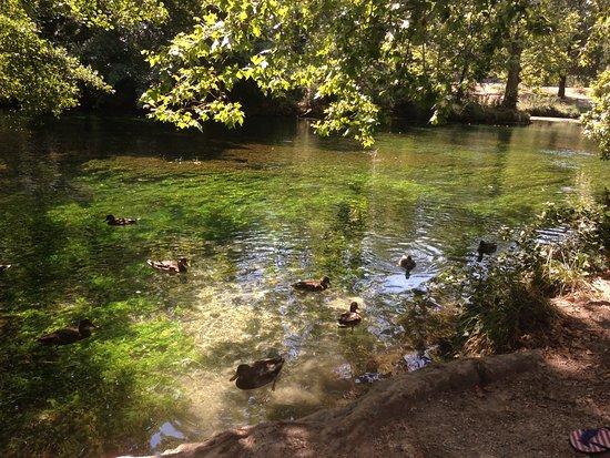 Fontaine de Vaucluse, Frankrijk: joli coin pour pique-niquer après la ballade