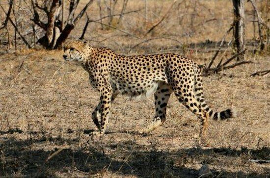 Kruger National Park: IMG-20160710-WA0012_large.jpg