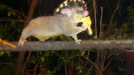 Man Friday: I met the fastest possum in Mexico