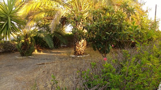 Gennadi, กรีซ: Front garden