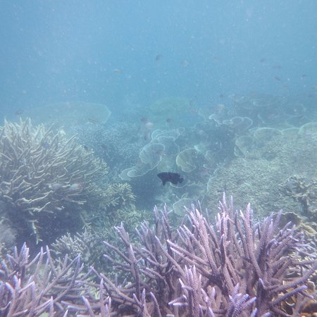Busuanga Island, Filipiny: Marine life off the beach at Pass Island #4