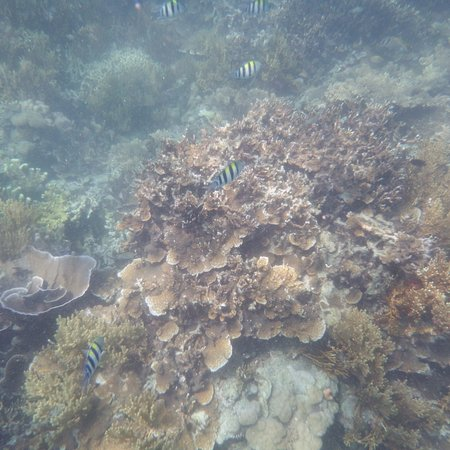 Busuanga Island, Filipiny: Marine life off the beach at Pass Island #7
