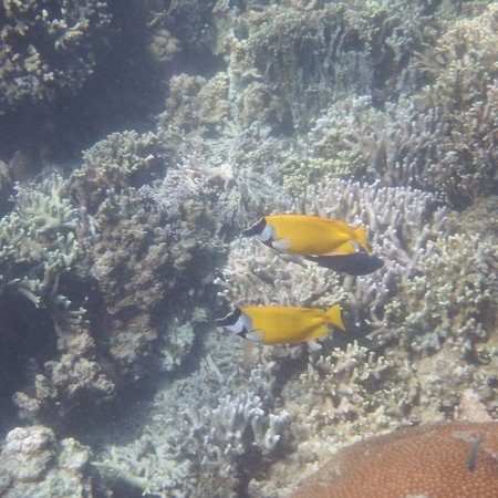 Busuanga Island, Filipiny: Marine life off the beach at Pass Island #9
