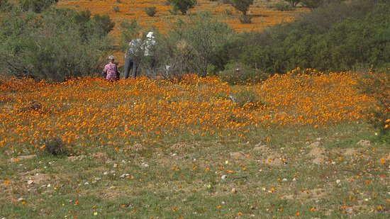 Northern Cape, Νότια Αφρική: amongst the flowers