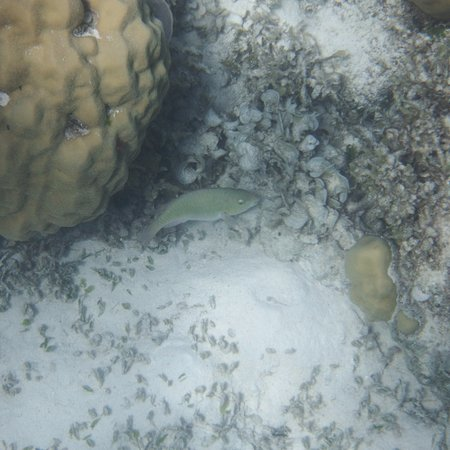 The marine life at Siete Pecados #1