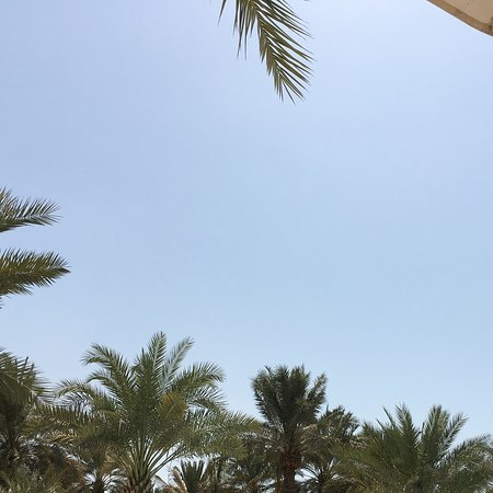 Arabian Court at One&Only Royal Mirage Dubai: Ambiente de piscina