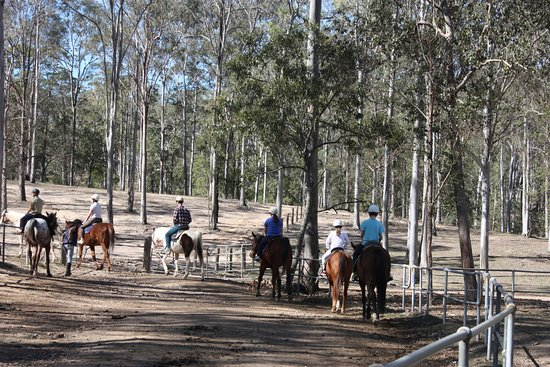 A gentle trail ride on a sunny afternoon