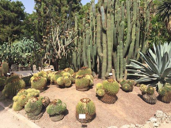 A Peaceful Escape - A Beautiful Garden