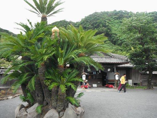 桜島を借景に