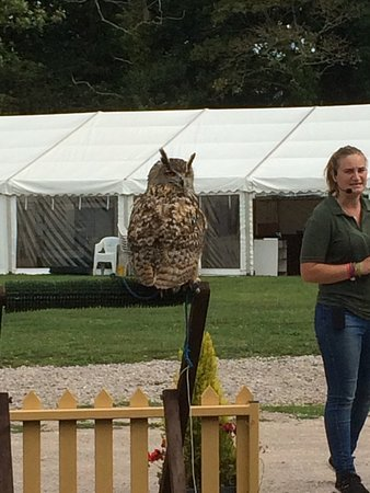 Haven Falconry and display
