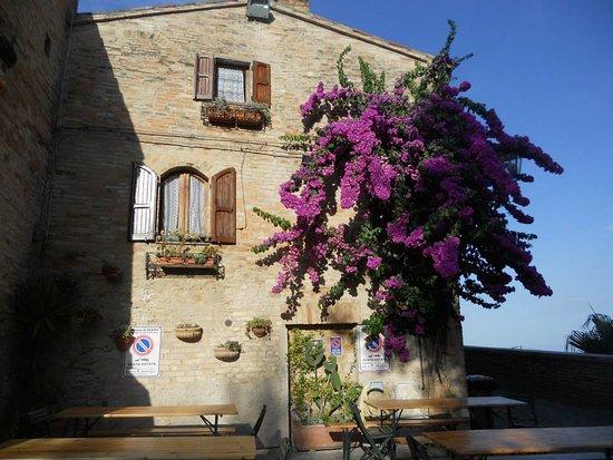 Bouganville alla Pizzeria Marcella torre di Palme