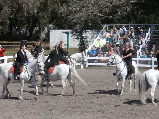 Colonel Herrmann's Royal Lipizzan Ranch