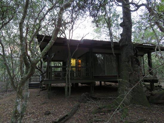 Phinda Private Game Reserve-bild