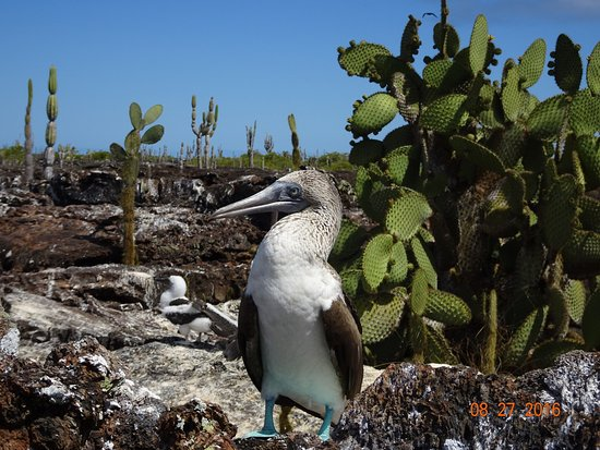 Puerto Villamil, Ekvador: photo1.jpg