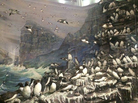 Российский государственный музей Арктики и Антарктики: photo1.jpg