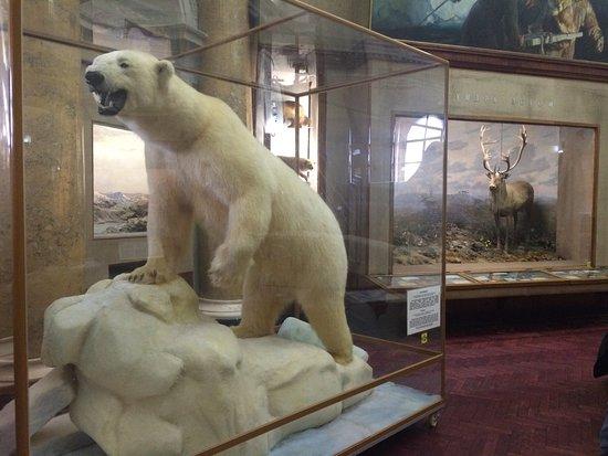 Российский государственный музей Арктики и Антарктики: photo2.jpg