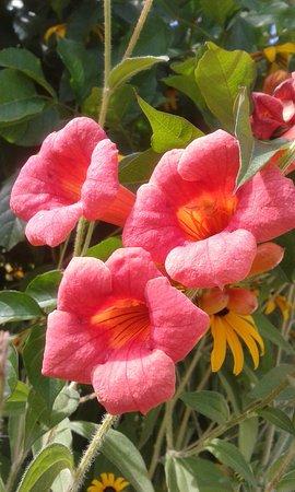 Chateau de Villandry: Flowers in the garden