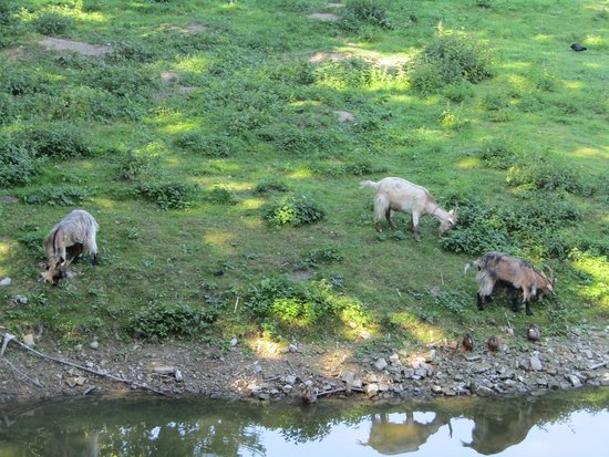 Ieper (Ypres), Bélgica: Look over the wall & see the goats