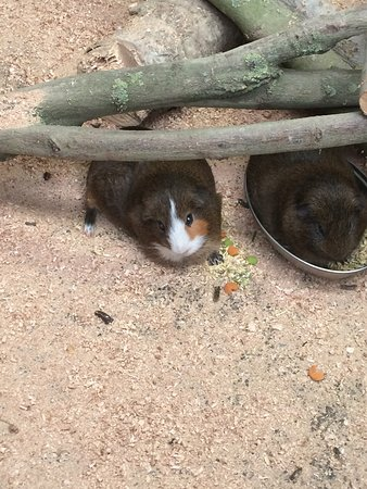 Banham Zoo : photo1.jpg