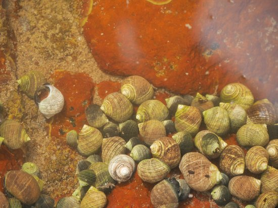 Smith's Cove, Canada: Periwinkles